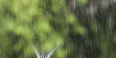 Regn och regndroppe
