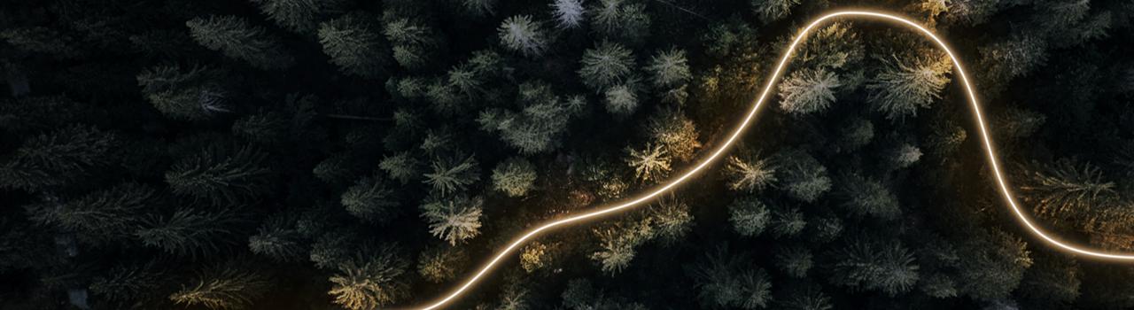 Skog lysande tråd